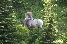 glacier-national-park-662208_1920