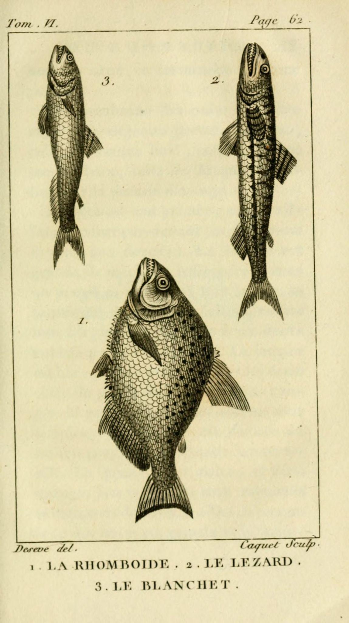 gravures_poissons_-_6085_rhomboide__-_lezard__-_blanchet