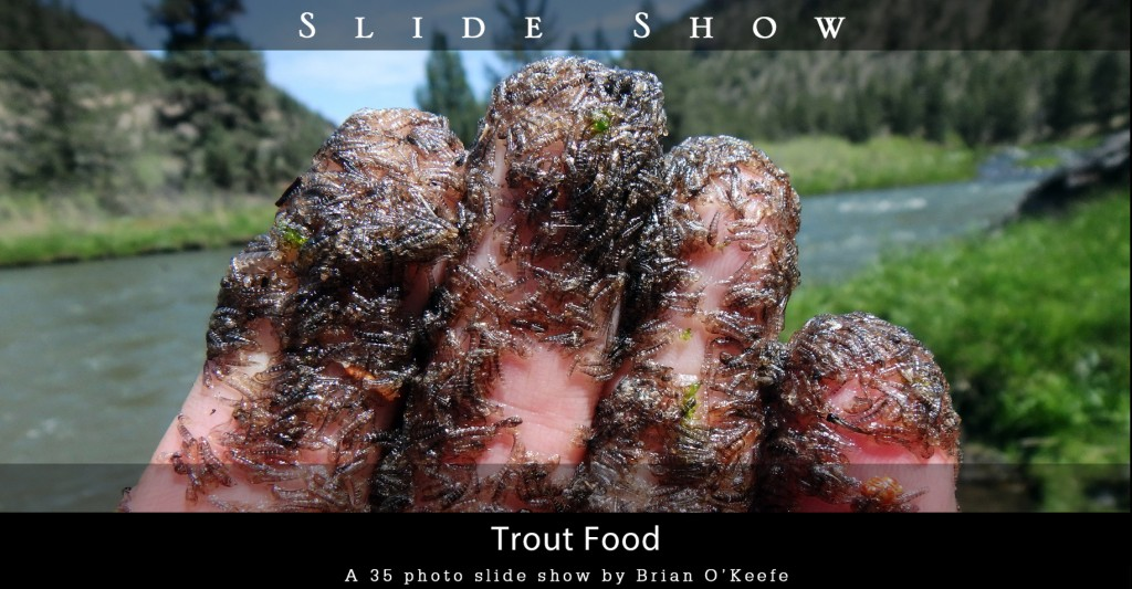trout-food
