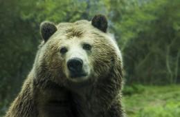 bear-1245807_1920
