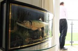 trout-ina-box