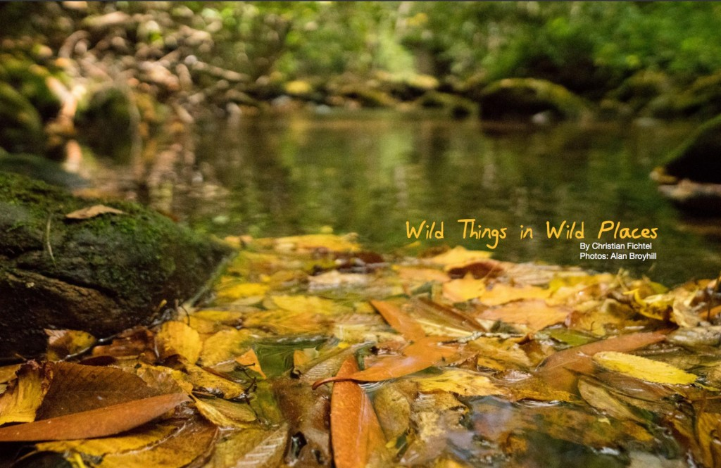 wild-fish