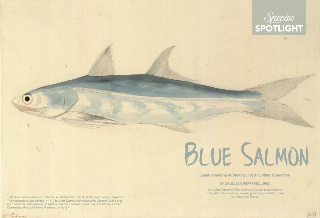 blue-salmon