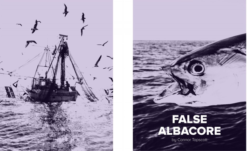 false-albacore