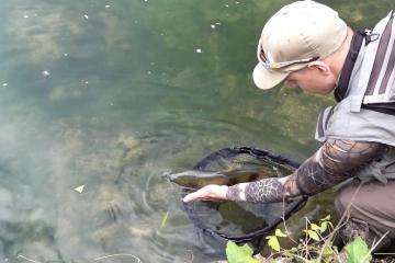 Le Mouching : Pêche à la mouche, Fly Fishing